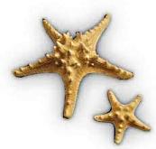 Διακοσμητικοί  φυσικοί  αστερίες