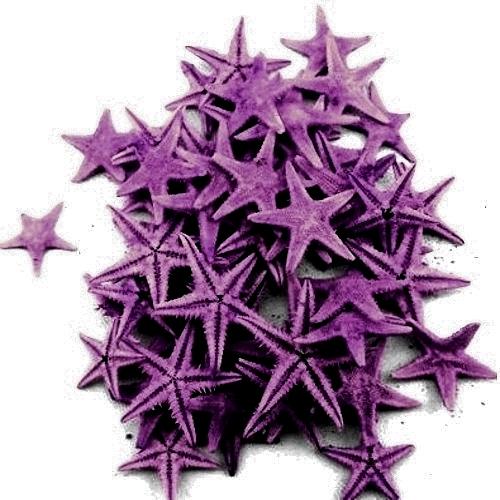 Μώβ Φυσικοί Αστερίες 1-2εκ Συσκευασία 100 τεμ