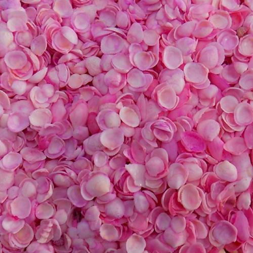 Κοχυλάκι Αχιβαδάκι Μίνι Ρόζ 1εκ 1kg