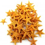 Πορτοκαλί Φυσικοί Αστερίες 1-2εκ Συσκευασία 100 τεμ